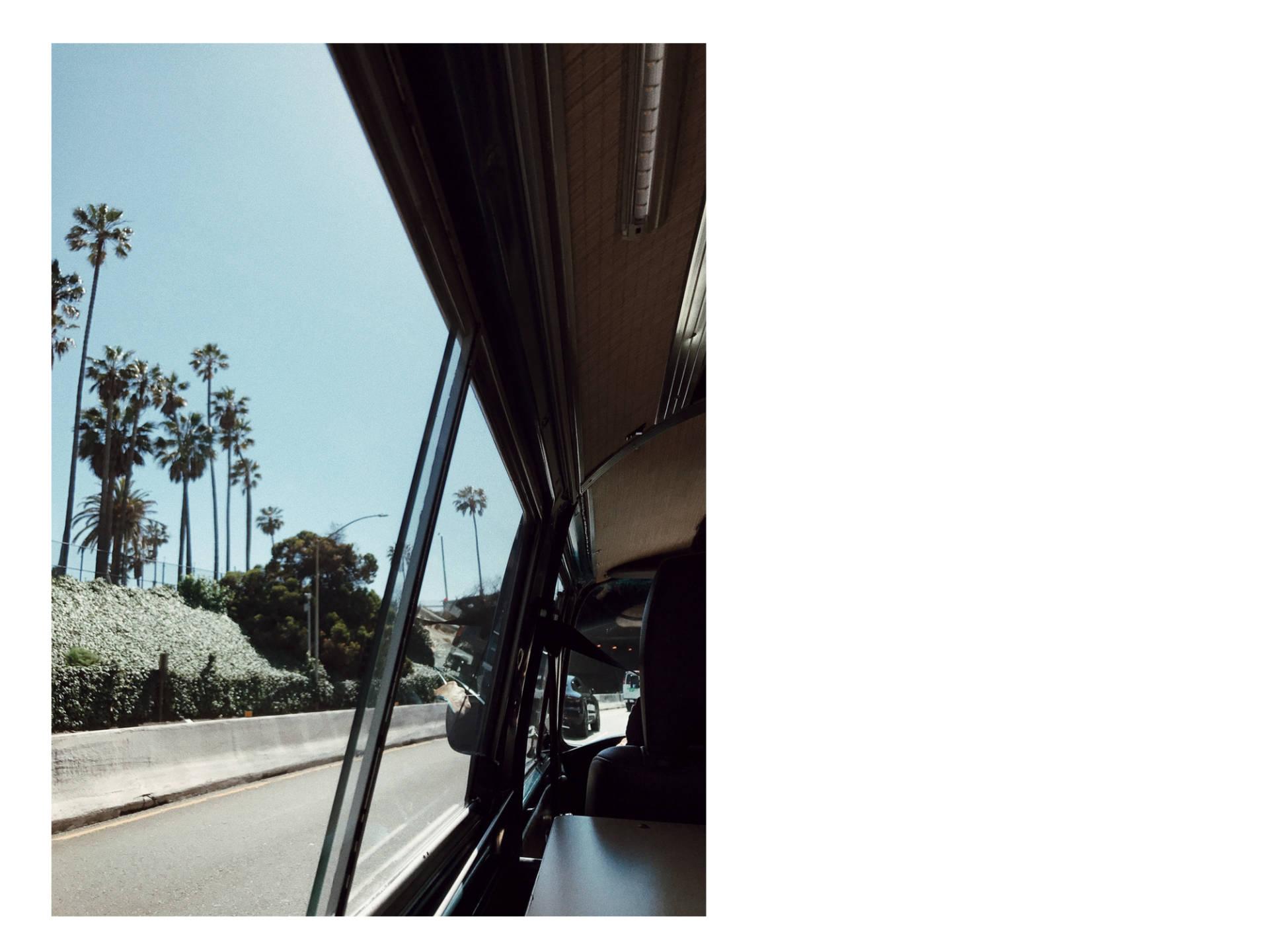 california_bull_trip
